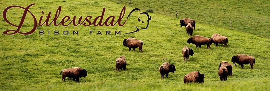 Ditlevsdal Bison Farm Rute 1